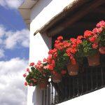 Jak dobrać krzewy ozdobne na balkon lub taras?