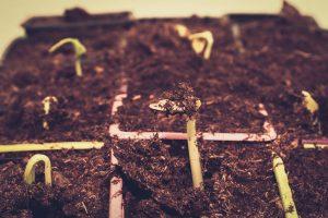 Jak poprawić stan trawnika i zabezpieczyć ogródek przed szkodnikami Top 5 rad!