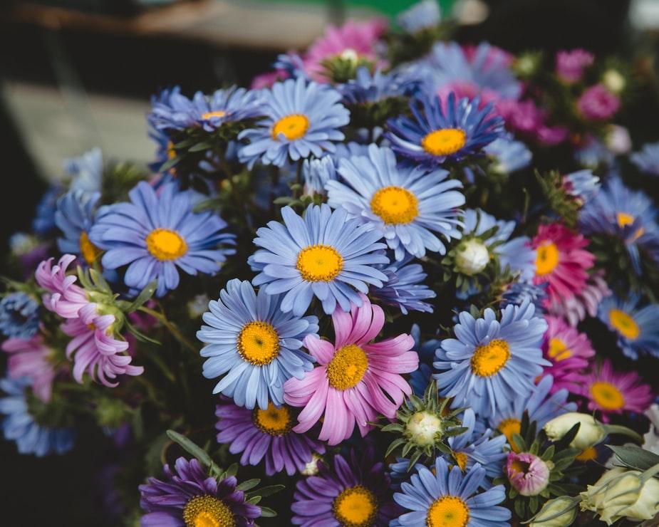 Sztuczne kwiaty - wciąż modne i popularne