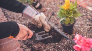 Nawożenie roślin doniczkowych – poradnik!